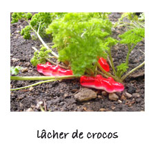 lâcher de crocos...